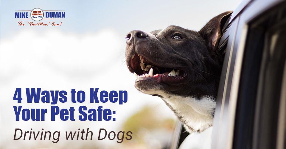 pet-car-safety